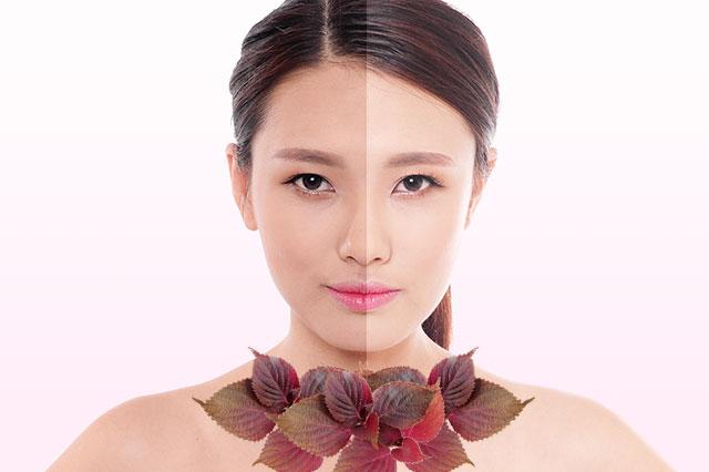 Lá tía tô chứa nhiều vitamin và chất chống oxy hoá giúp làm trắng da hiệu quả cho nữ