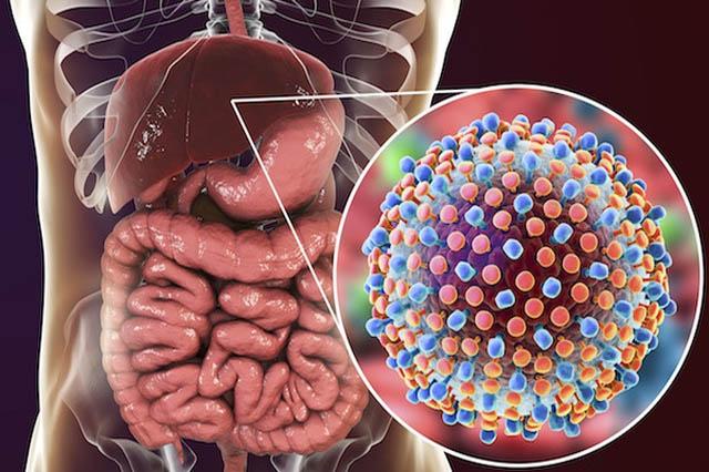 Thực phẩm chức năng mát gan sẽ đi đến cơ quan bị tổn thương, hư hại và sửa chữa chúng