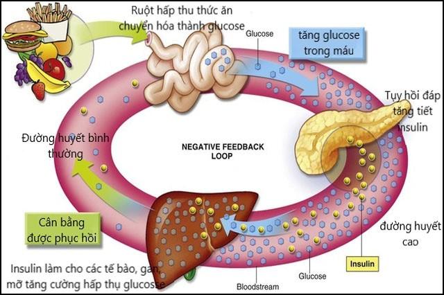 Lá gan có vai trò vô cùng quan trọng với cơ thể mỗi người