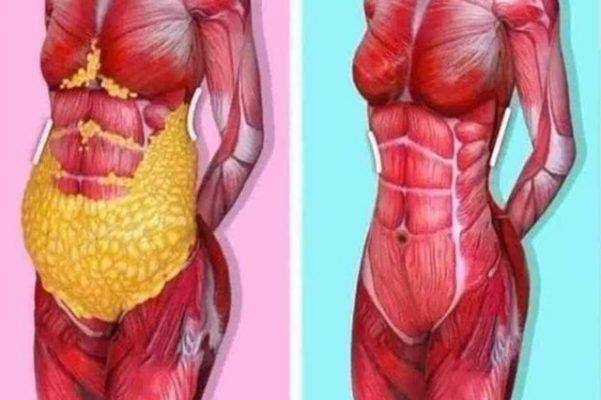 Thừa mỡ nội tạng: Mối nguy hiểm tiềm ẩn đối với sức khỏe con người